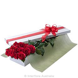 12 Rose Box